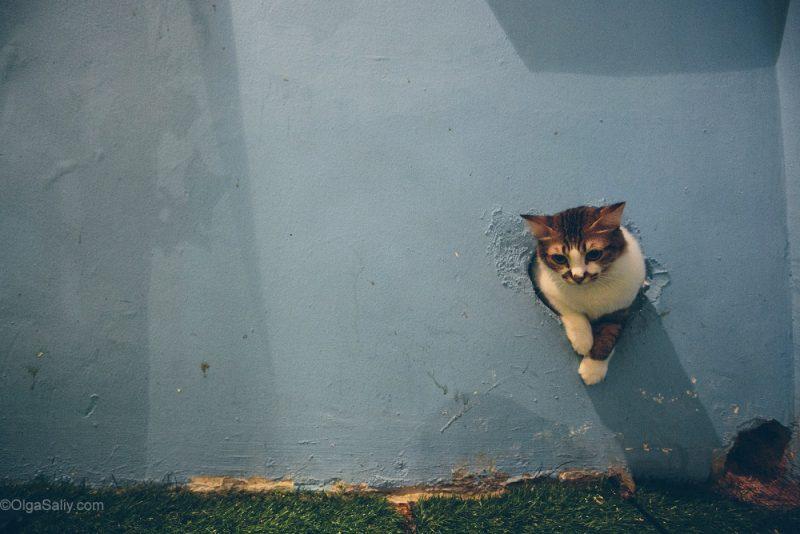 Котики в кото кафе Куала Лумпур, Малайзия (15)