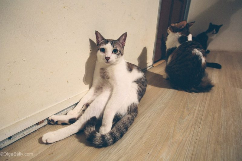 Смешные коты в Кото-кафе
