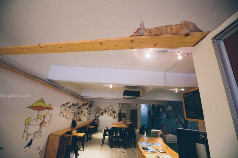 Котики в кото кафе Куала Лумпур, Малайзия (13)