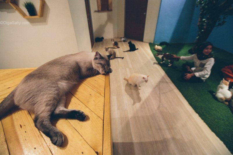 Котики в кото кафе Куала Лумпур, Малайзия (10)