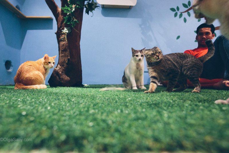 Коты дерутся в Кото-кафе