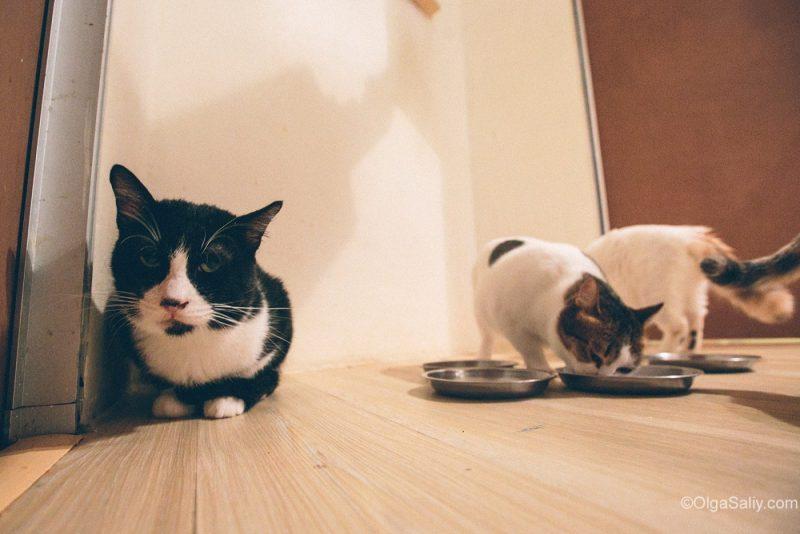 Котики в кото кафе Куала Лумпур, Малайзия (1)