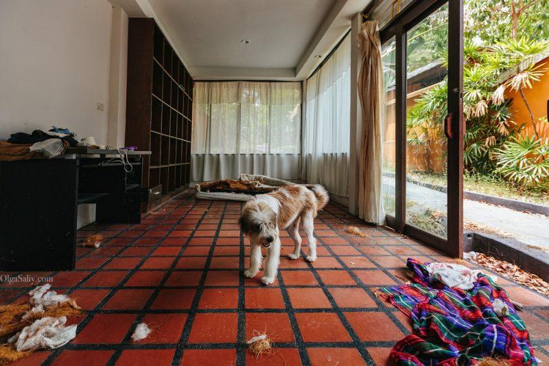 Заброшенный резорт с собакой в Тайланде (1)