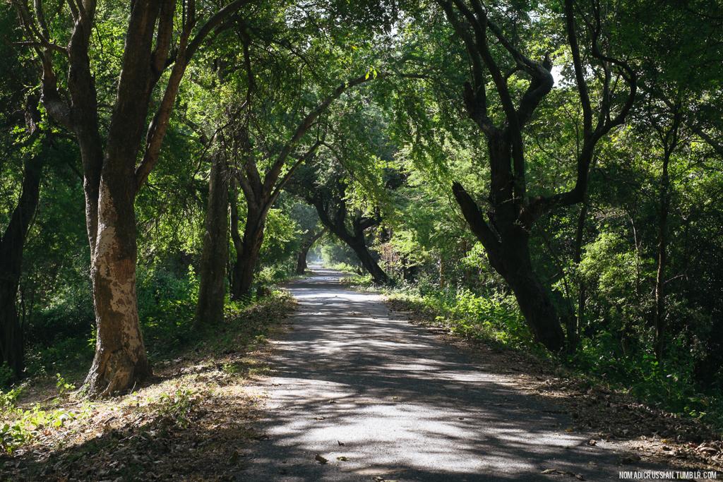 Дорога сквозь заповедник Коши Таппу