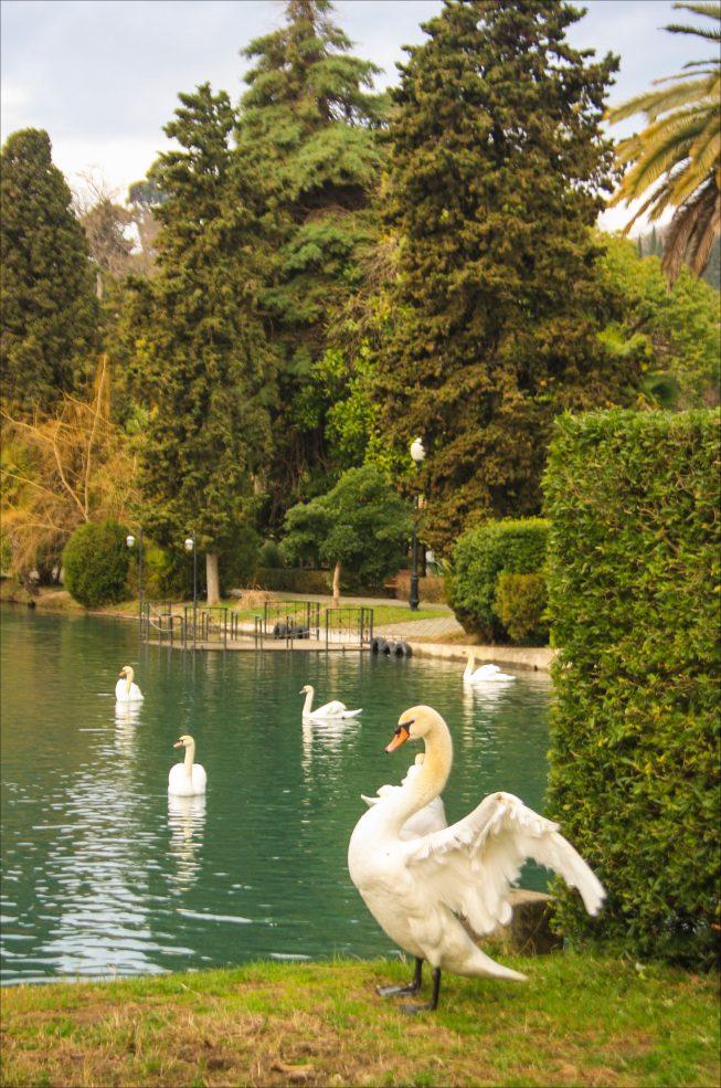 Парк в Абхазии