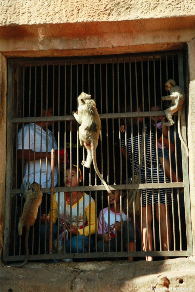 Храм обезьян в Лопбури, Тайланд (35)