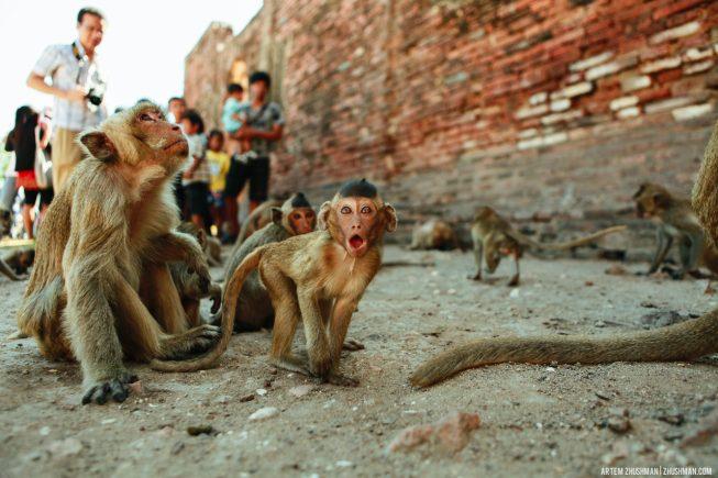 Храм обезьян в Лопбури, Тайланд (34)