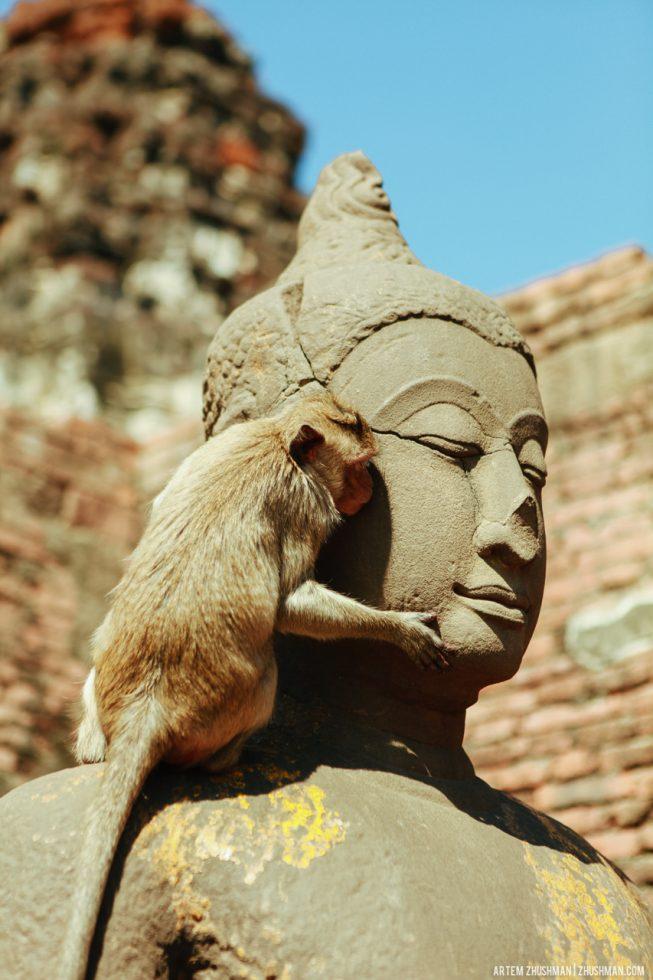 Храм обезьян в Лопбури, Тайланд (26)