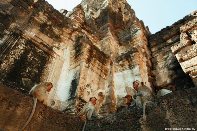Храм обезьян в Лопбури, Тайланд (21)