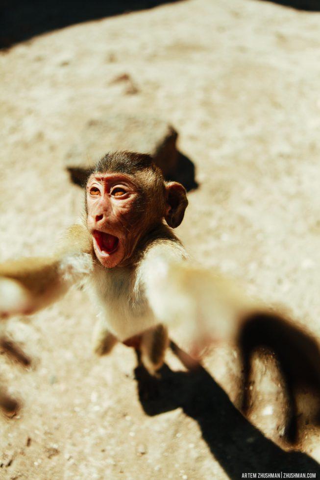 Храм обезьян в Лопбури, Тайланд (18)