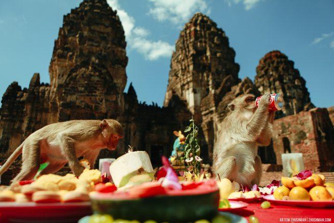 Храм обезьян в Лопбури, Тайланд (4)