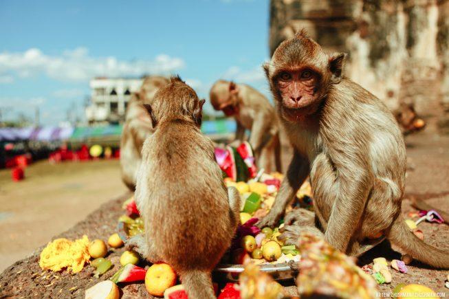 Храм обезьян в Лопбури, Тайланд (1)