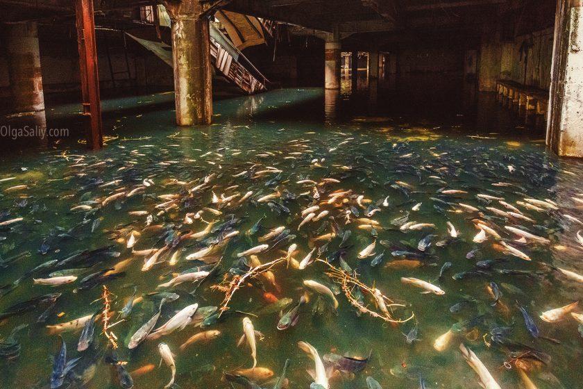 Затопленный торговый центр в Бангкоке