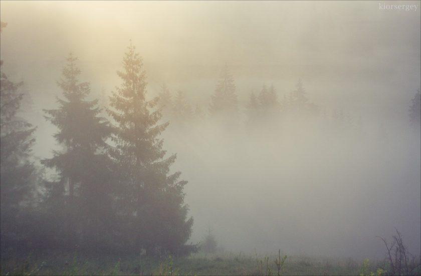 Туман в лесу, Шипот, Западная Украина