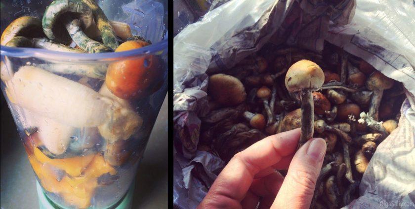 Сколько грибов нужно съесть