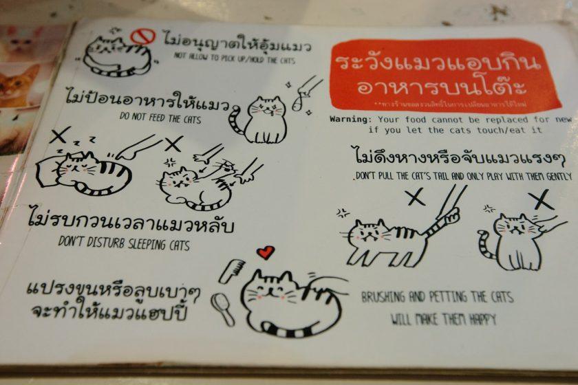 Кото кафе в Бангкоке (21)