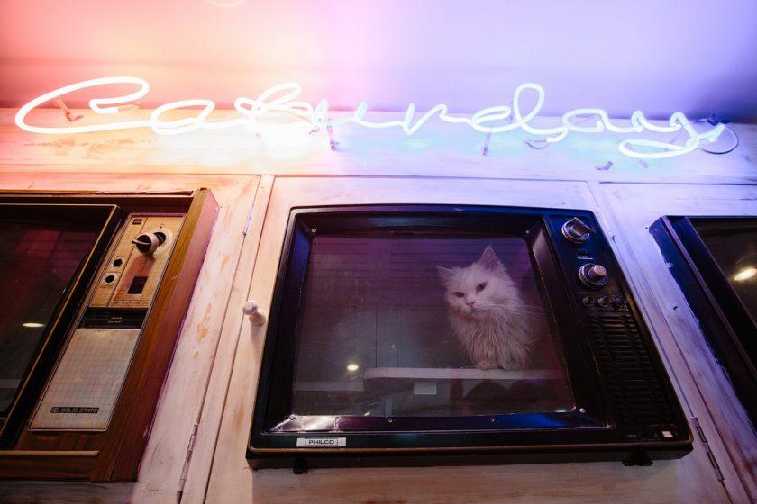 Caturday Cat Cafe