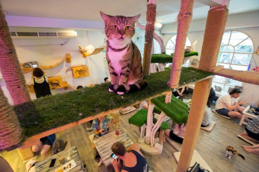 Недовольный кот в кото-кафе