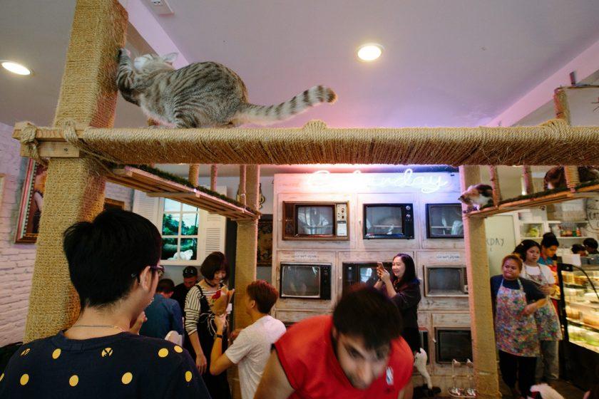 Кото кафе в Бангкоке (12)