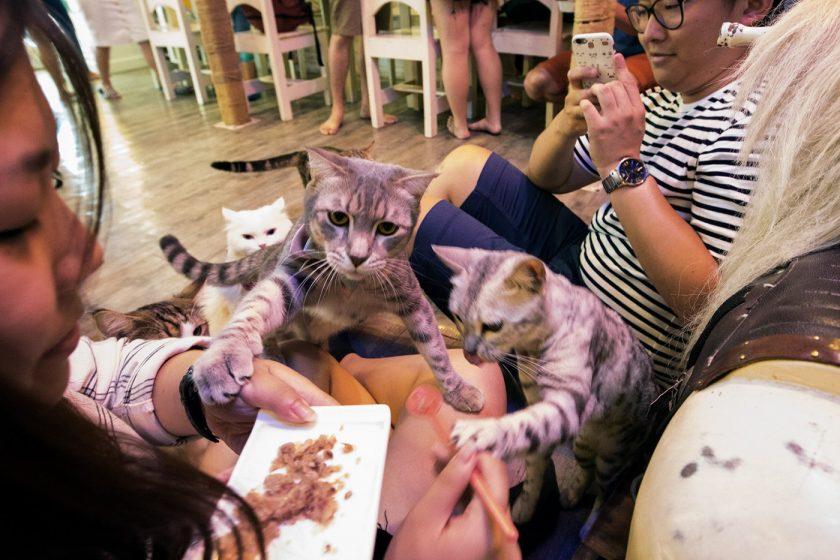 Кото кафе в Бангкоке (11)