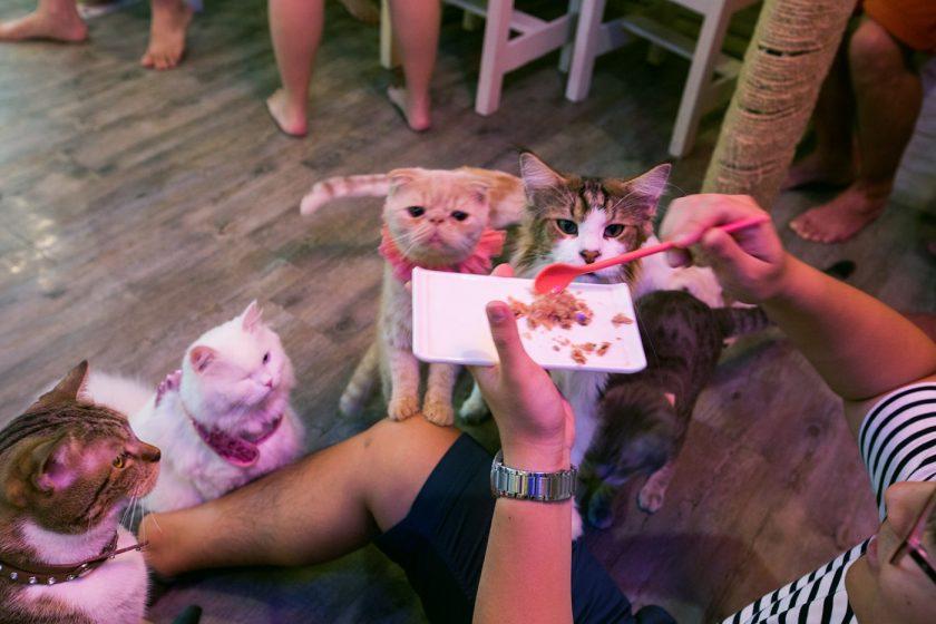 Кото кафе в Бангкоке (10)