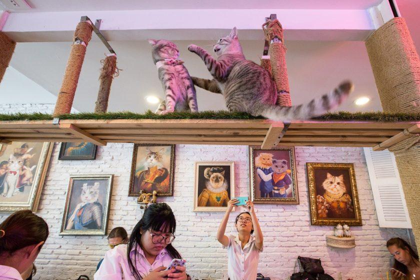 Кото кафе в Бангкоке (6)