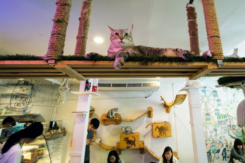 Кото кафе в Бангкоке (4)