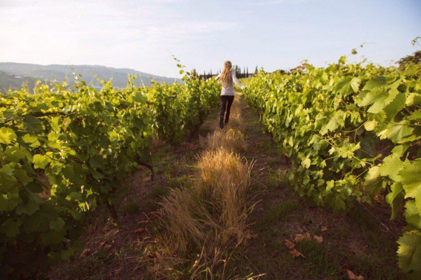 Виноградники в Португалии