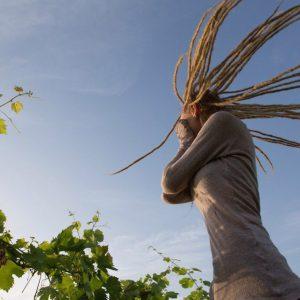 Долина Доро, Виноградники в Португалии