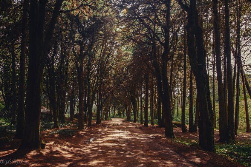 Сказочный лес в Синтре