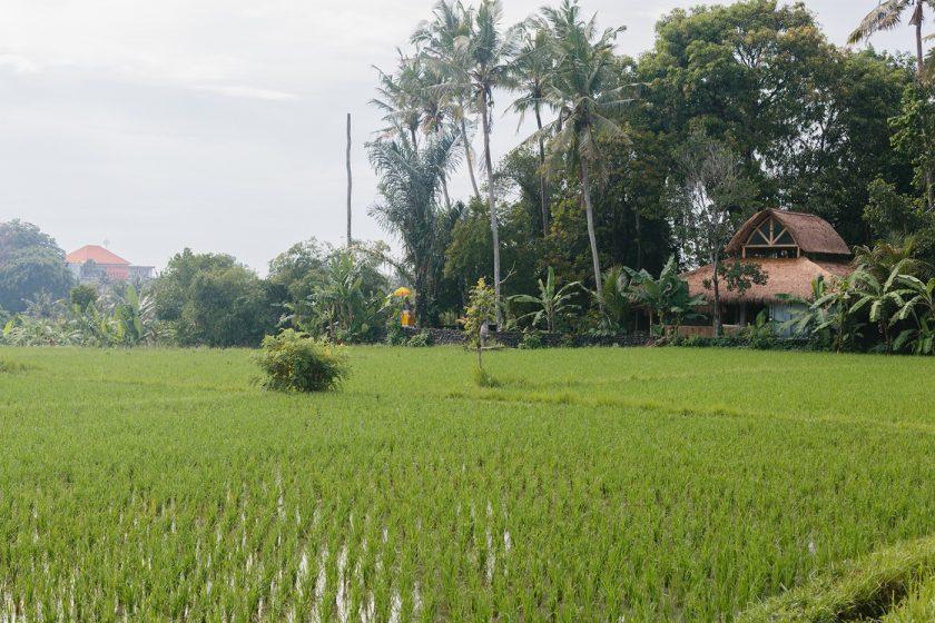 Продается дом на Бали (1)