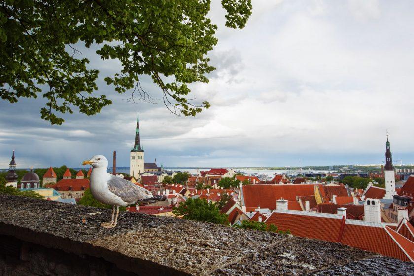 Бесплатные места в Таллине (1)