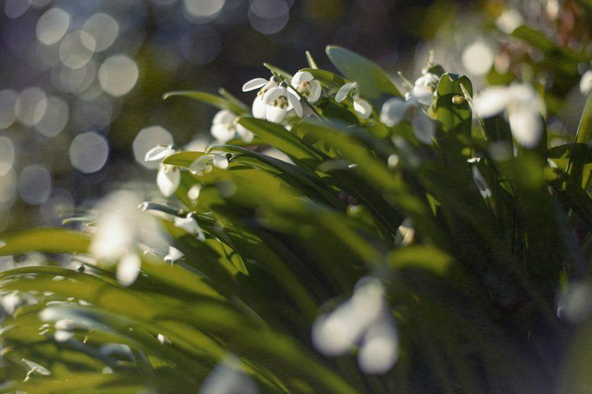 Ботанический сад в Батуми, подснежники!