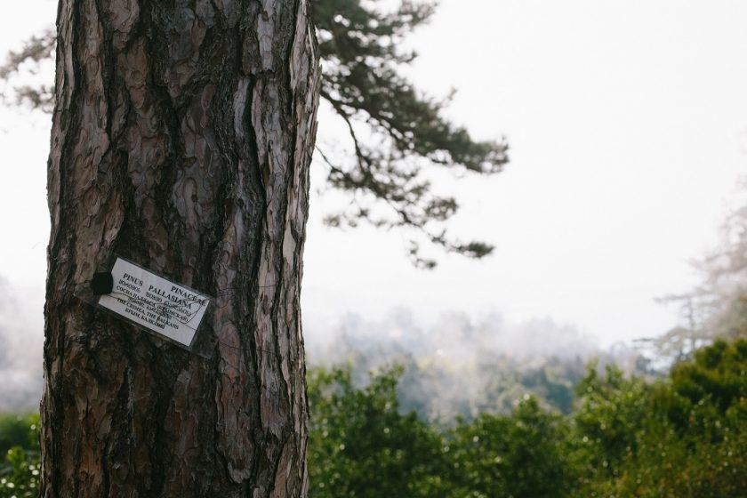Ботанический сад в Батуми, фото и описание как добраться (12)