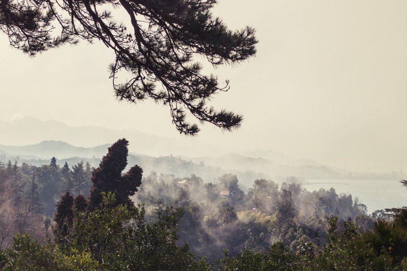 Ботанический сад в Батуми, фото и описание как добраться (11)