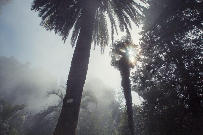 Туман и пальмы в ботаническом саду Батуми