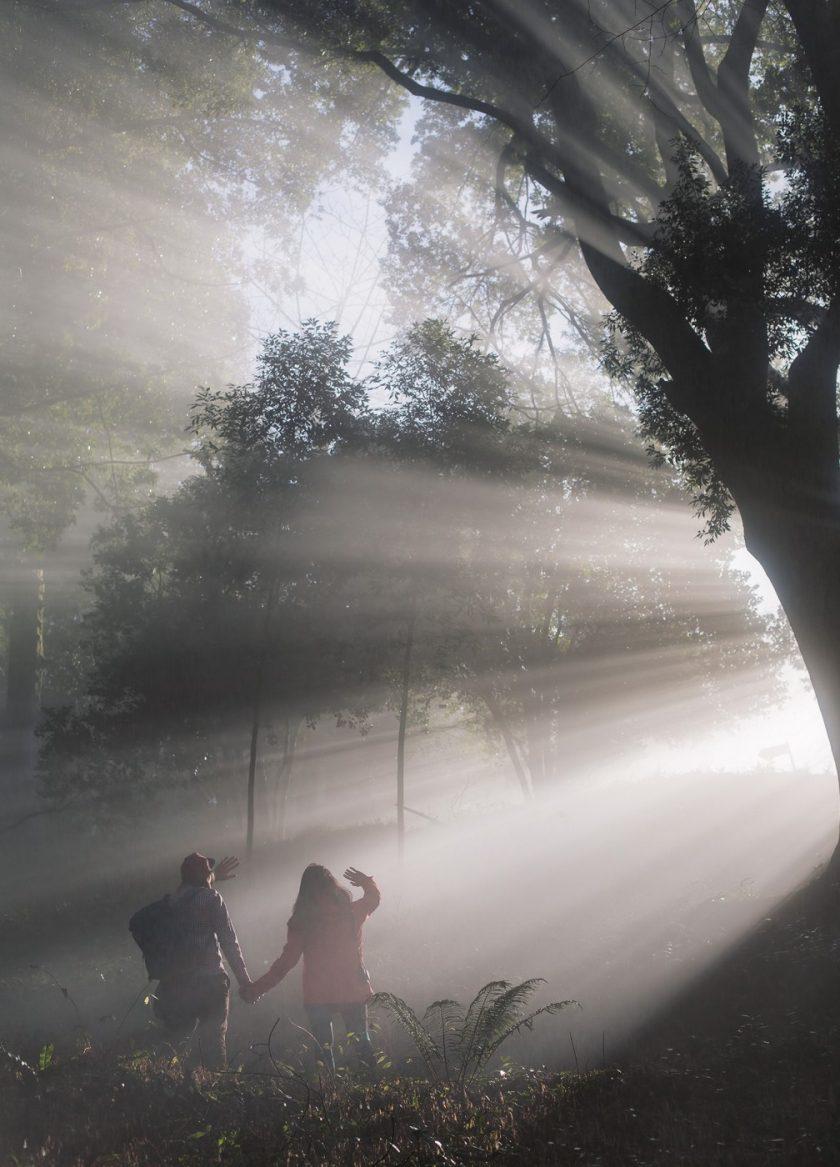 Вот он! на нас спустился волшебный туман!