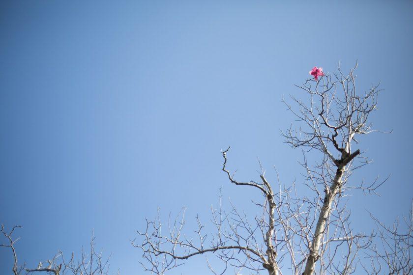 Ботанический сад в Батуми, фото и описание как добраться (5)
