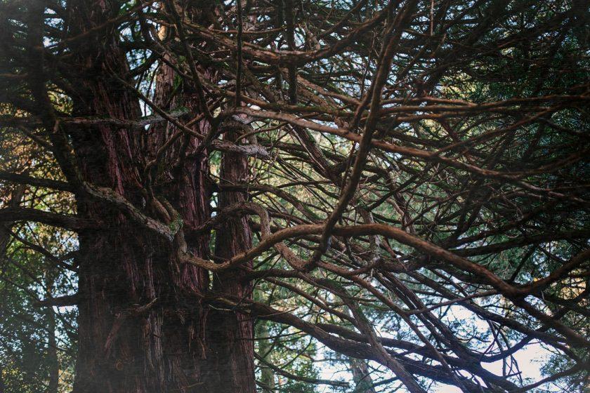 Ботанический сад в Батуми, фото и описание как добраться (3)