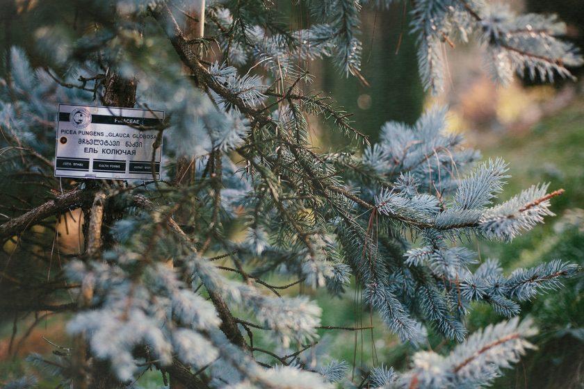 Ботанический сад в Батуми, фото и описание как добраться (2)