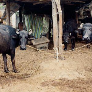Читван, хроники мото путешествия по Непалу