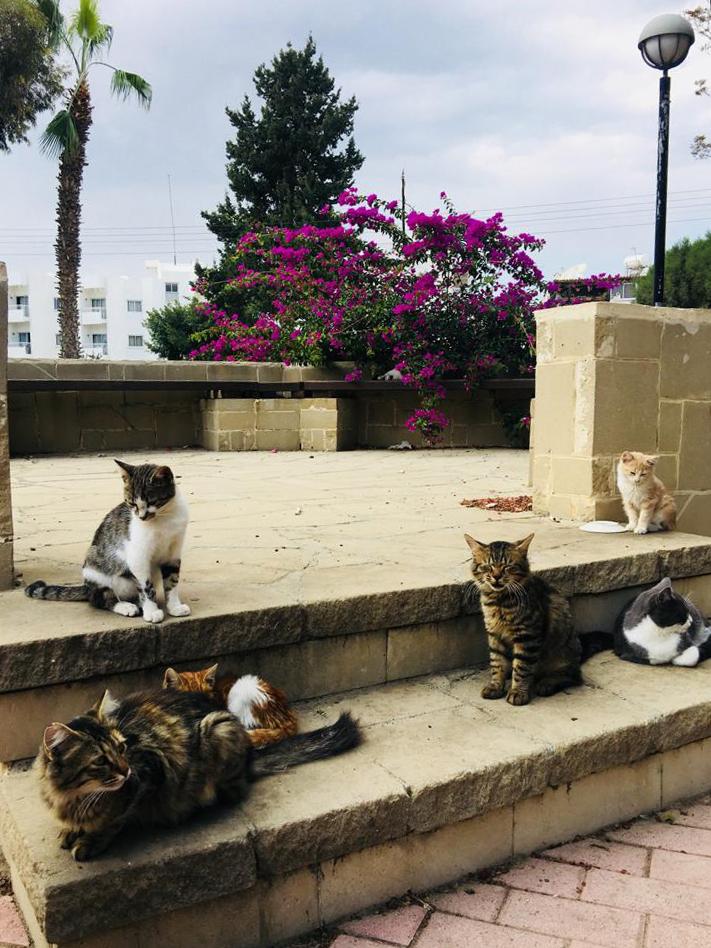 Жизнь на Кипре (13)