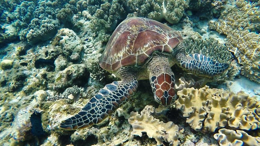 Черепахи на Апо